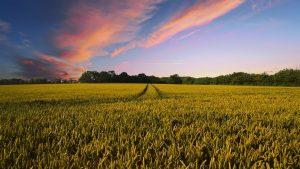 Jak pobyt na wsi wpływa na zdrowie